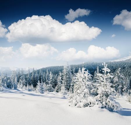 winter wonderland: Beautiful winter panorama with snow covered trees Stock Photo