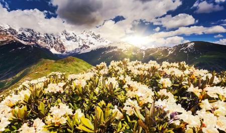 Alpine meadows at the foot of  Mt. Shkhara, Chkhutnieri pass. Upper Svaneti, Georgia, Europe. Caucasus mountains. Beauty world. photo