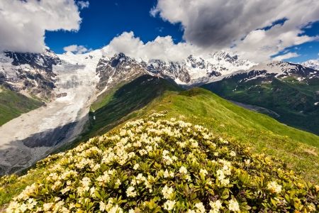 Alpine meadows at the foot of  Tetnuldi glacier, Chkhutnieri pass. Upper Svaneti, Georgia, Europe. Caucasus mountains. Beauty world. photo