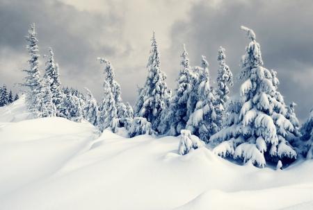 neige noel: Beau paysage d'hiver avec de la neige a couvert des arbres