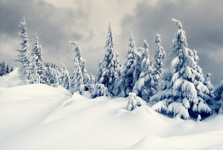 rime: Beautiful winter landscape with snow covered trees Stock Photo