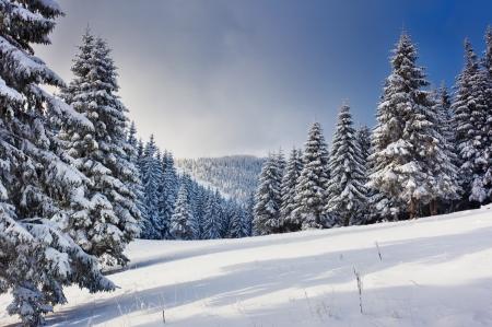 monta�as nevadas: Un d?a fr?o y soleado en las monta?as