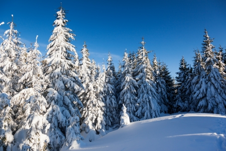 A frosty and sunny day is in mountains. Christmas scene photo