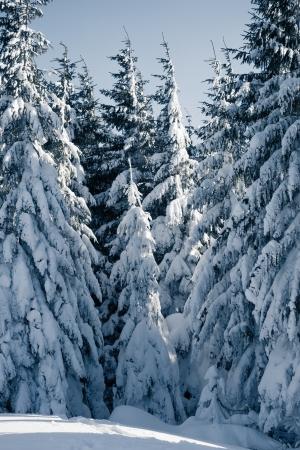montañas nevadas: Un día frío y soleado se encuentra en las montañas. Escena de la Navidad Foto de archivo