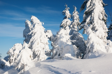 A frosty and sunny day is in mountains. Christmas scene Stock Photo