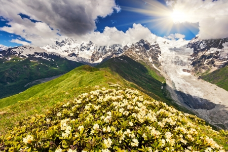 Alpine meadows at the foot of  Tetnuldi glacier, Chkhutnieri pass. Upper Svaneti, Georgia, Europe. Caucasus mountains. Beauty world. photo