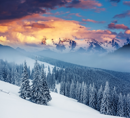 christmas ground: Fantastic winter landscape. Dramatic overcast sky. Carpathian, Ukraine, Europe. Beauty world. Stock Photo