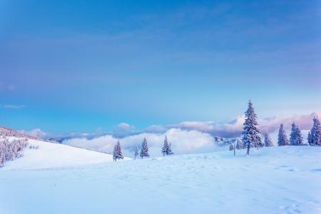 snow scene: Fantastic winter landscape. Blue sky. Carpathian, Ukraine, Europe. Beauty world.