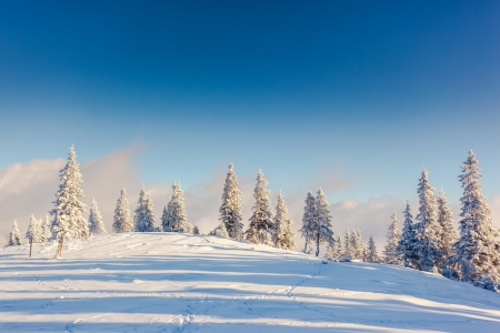Fantastic winter landscape. Blue sky. Carpathian, Ukraine, Europe. Beauty world.
