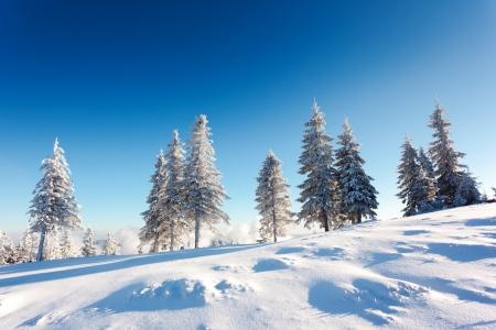 Fantastic winter landscape. Blue sky. Carpathian, Ukraine, Europe. Beauty world.  photo