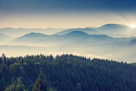 美しい晴れた日は、山の風景です。カルパチア、ウクライナ、ヨーロッパ。