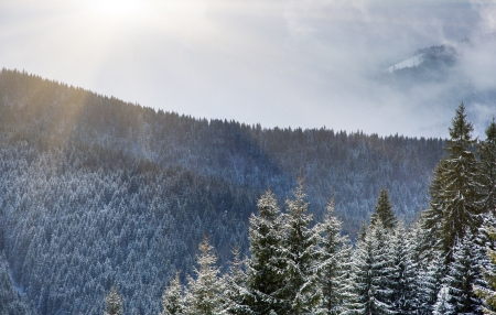 A frosty and sunny day is in mountains. Carpathian, Ukraine. photo