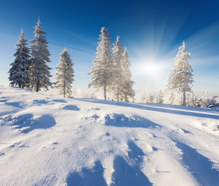 rime frost: A frosty and sunny day is in mountains Stock Photo