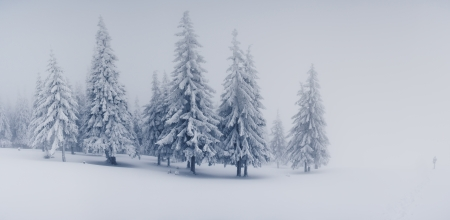hoar frost: Beautiful winter landscape with snow covered trees Stock Photo