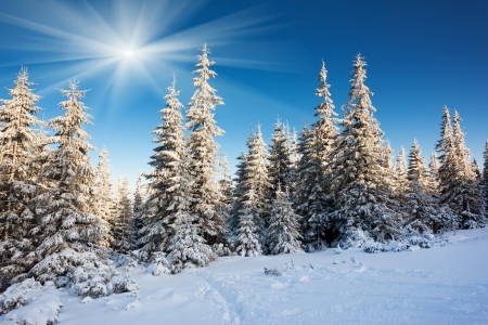 winter forest: A frosty and sunny day is in mountains Stock Photo