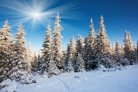 Een ijzig en zonnige dag is in bergen