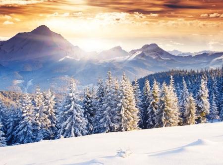 paesaggio: Serata fantastica paesaggio invernale. Cielo coperto drammatico. Collage creativo. Mondo di bellezza.