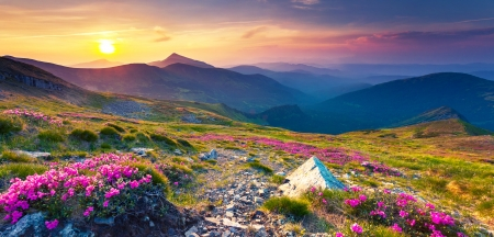 Magic pink rhododendron flowers on summer mountain. Carpathian, Ukraine, Europe. Beauty world.