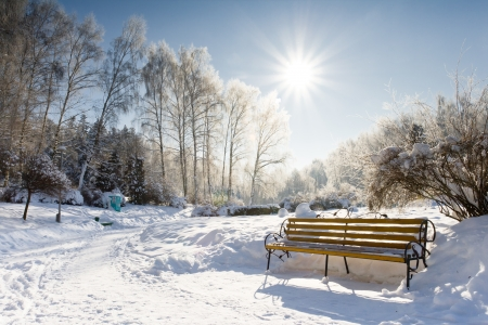 A frosty and sun day is in park photo