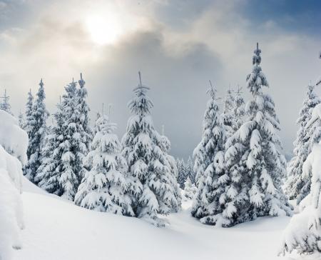 木々 は霧氷と山の雪で覆われて。