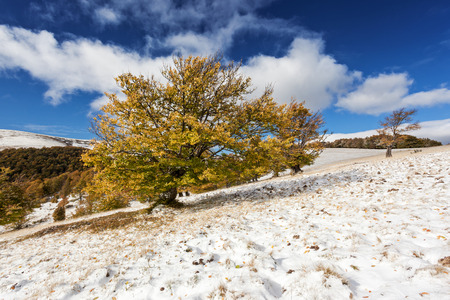 Beautiful colorful autumn leaves in the forest. Overcast blue sky. Carpathian, Ukraine, Europe. Beauty world. photo