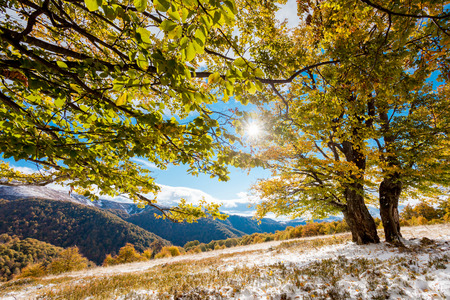 Beautiful colorful autumn leaves in the forest. Carpathian, Ukraine, Europe. Beauty world. photo