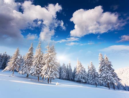 fairytale background: Fantastic winter landscape. Dramatic overcast sky. Carpathian, Ukraine, Europe. Beauty world. Stock Photo