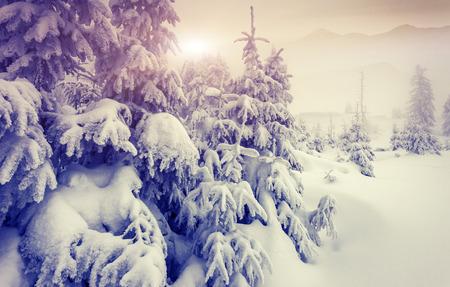 sapin: Fantastique paysage d'hiver du soir. Ciel couvert dramatique. Collage cr�atif. monde de la beaut�.