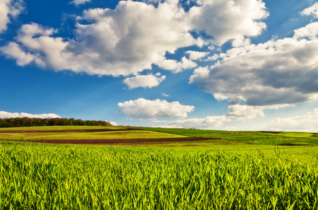 Beautiful sunny day in the field with blue sky. Overcast sky. Ukraine, Europe. Beauty world.  photo