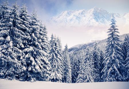 winter wonderland: Fantastic winter landscape and blue sky. Creative collage. Beauty world.