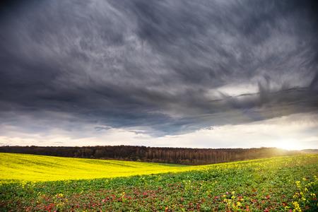 Fantastic green field at the dramatic overcast sky. Ukraine, Europe. Beauty world. photo