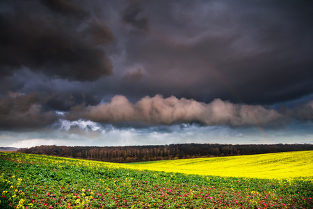 Fantastic green field at the dramatic overcast sky. Ukraine, Europe. Beauty world. photo