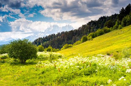 Beautiful view of alpine meadows at the foot of  Mt. Ushba. Upper Svaneti, Georgia, Europe. Caucasus mountains. Beauty world. photo