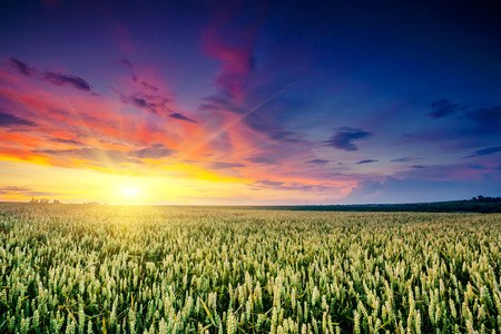 Fantastic wheat field at the sunset. Colorful overcast sky. Ukraine, Europe. Beauty world. photo