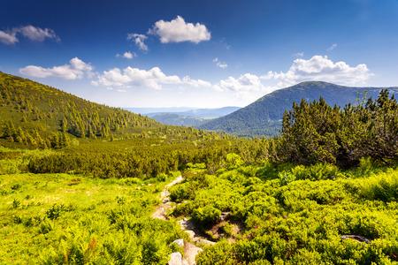 Beautiful sunny day is in mountain landscape. Carpathian, Ukraine, Europe. Beauty world. photo