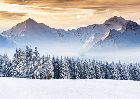 sapin neige: Fantastique paysage d'hiver de soirée. Ciel couvert dramatique. Collage créatif. monde de beauté. Banque d'images