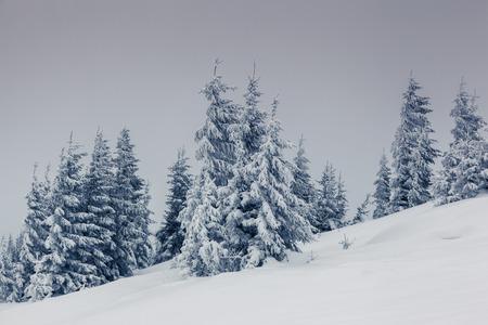 snow scenes: Fantastic winter landscape. National Park. Carpathian, Ukraine, Europe. Beauty world.