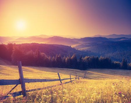 flores retro: Soleadas colinas fant�sticas bajo el cielo de la ma�ana. Paisaje dram�tico. C�rpatos, Ucrania, Europa.