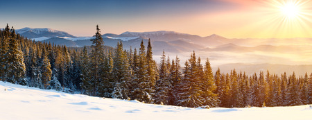 winter forest: Majestic sunset in the winter mountains landscape.