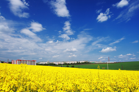 industry park: Yellow field rapeseed in bloom with blue sky and white clouds Stock Photo
