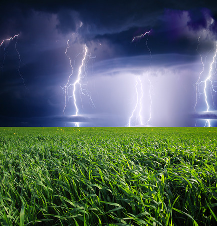 cornfield: Thunderstorm with lightning in green meadow. Dark ominous clouds.