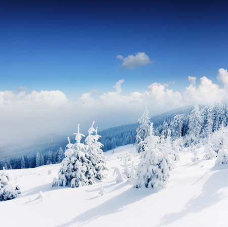 christmas landscape: Beautiful winter landscape with snow covered trees.