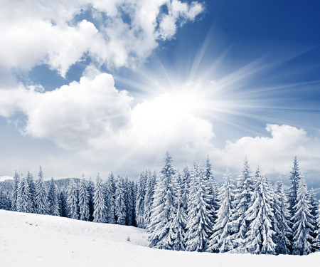 Mooie winterlandschap met sneeuw bedekte bomen Stockfoto