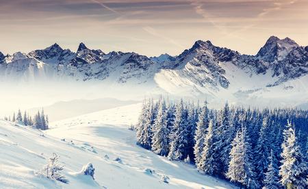 invierno: Fantástico paisaje de invierno. Cielo nublado dramático. Collage creativo. Mundo de la belleza. Foto de archivo