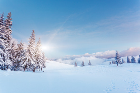 christmas ground: Fantastic winter landscape. Blue sky. Carpathian, Ukraine, Europe. Beauty world.