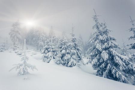snow ground: Fantastic winter landscape. National Park. Carpathian, Ukraine, Europe. Beauty world.