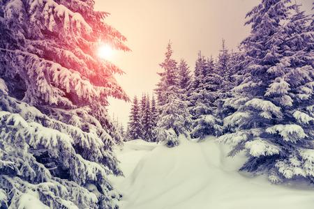 wintry: Amazing evening winter landscape. National Park. Carpathian, Ukraine, Europe. Beauty world. Retro style filter. Instagram toning effect. Happy New Year! Stock Photo