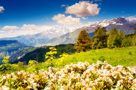 Majestic view of alpine meadows with blue sky at the foot of Tetnuldi glacier. Upper Svaneti, Georgia, Europe. Caucasus mountains. Beauty world. photo