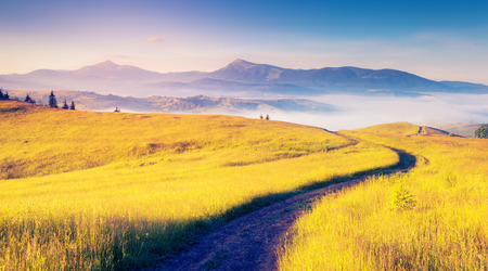 scenery: Fantastic sunny hills under morning blue sky. Dramatic scenery. Carpathian, Ukraine, Europe. Beauty world.