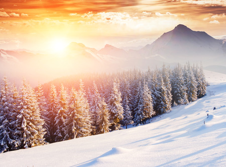 christmas landscape: Fantastic evening winter landscape. Dramatic wintry scenery. Creative collage. National Park, Swiss, Europe. Beauty world. Retro style filter. Instagram toning effect. Happy New Year!